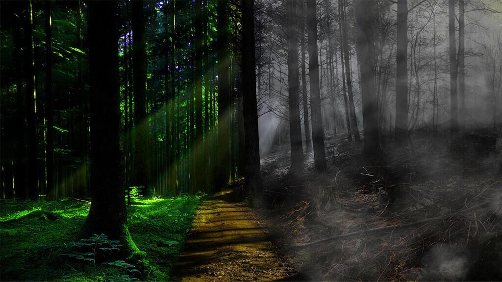 forest half life half death