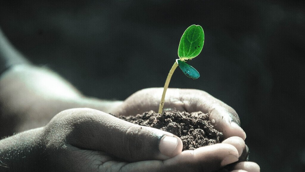 little hands holding a soil with a plant